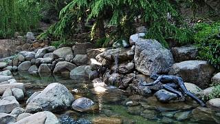 Нарцисс у озера