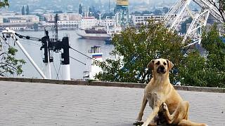 Вид на Южную бухту со стороны улицы Ленина