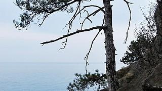Сосна на скале, недалеко от дворца Кичкинэ