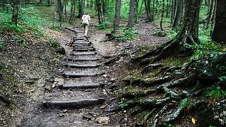 Лесные лестницы