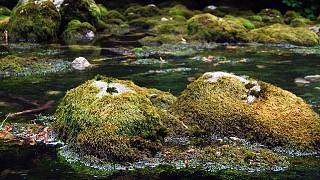 Мшистые берега горной речки