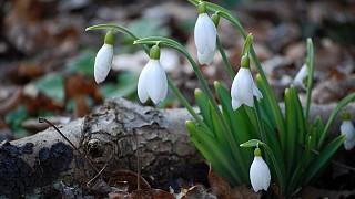 Первенцы крымской весны
