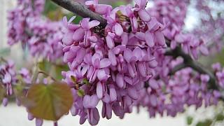 Весенннее цветение в Крыму