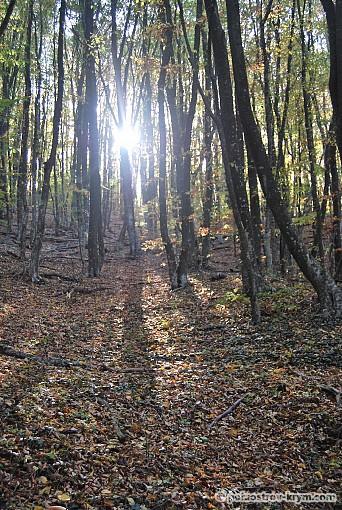 Лес на Мердвен-Кая
