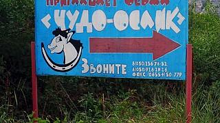 "Ферма ""Чудо-ослик"" в селе Залесное"