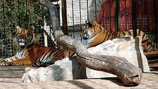 """Обитатели зоопарка """"Сказка"""""""