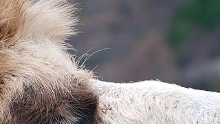 Верблюд при ближайшем рассмотрении