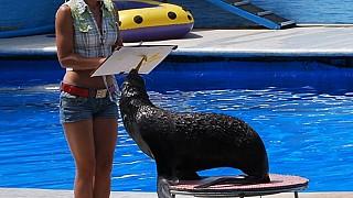 На представлении в севастопольском дельфинарии