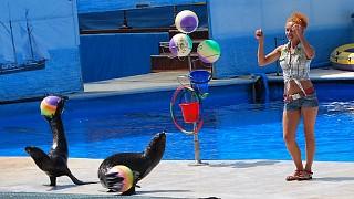 Морские котики показывают трюки с мячами