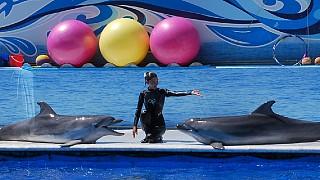 Выступление черноморских дельфинов-афалин