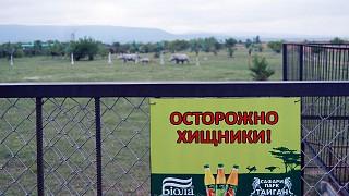"""Парк львов """"Тайган"""": осторожно, хищники!"""
