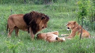Обитатели сафари-парка