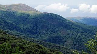 Заповедные леса Крыма
