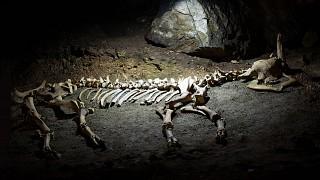 Еще одна палеонтологическая находка: останки доисторического сайгака
