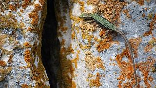 Ящерки - единственные постоянные жители Тепе-Кермена