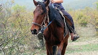 По окрестностям Демерджи можно совершить конную прогулку