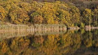 Озеро. Торопова Дача.