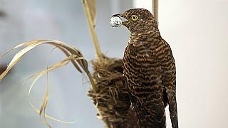 В музее природы Карадага