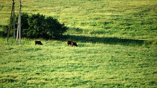 Байдарская долина в июне