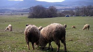 Ранняя весна в Байдарской долине
