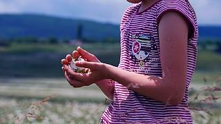 В Байдарской долине цветут ромашки