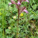 комперия-Назван в честь одного из первых русских ботаников-любителей начала XIX в. Компера, изучавшего растения Крыма.