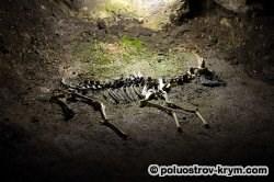 Одна из палеонтологических находок. Фото Ольги Иутиной