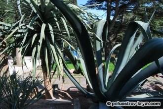 Мексиканский сад в парке