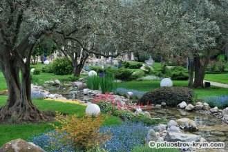 Старинная оливковая роща в парке