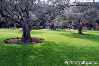 Оливковая роща. Парк