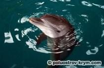 Оздоровительное плавание с дельфинами. Севастопольский дельфинарий в Казачьей бухте. Фото с сайта http://oceanarium.org.ua