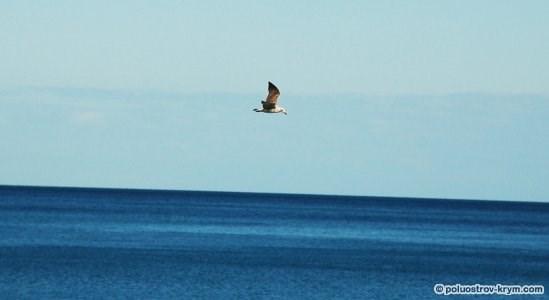 Море. Чайка